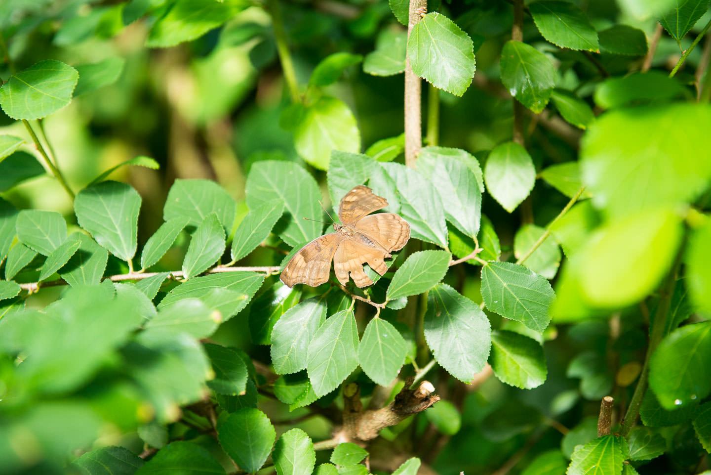 Butterfly Pavilion 01249