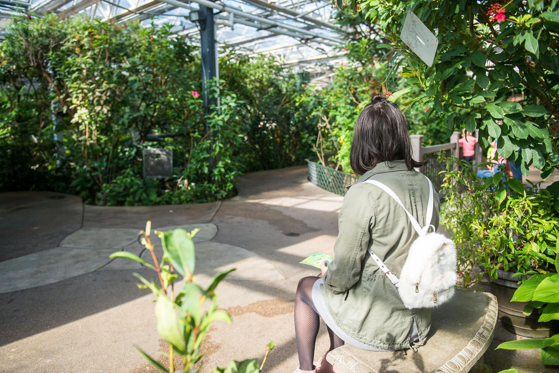 Butterfly Pavilion 01310