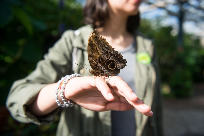 Butterfly Pavilion 01329