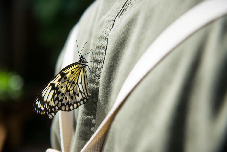 Butterfly Pavilion 01384