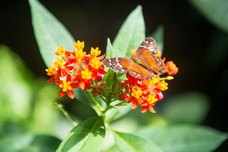 Butterfly Pavilion 01403